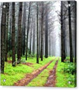 Forest Drive Acrylic Print