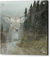 Forest Dweller Acrylic Print
