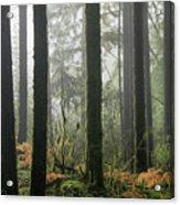 Forest Edge Acrylic Print