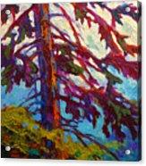 Forest Elder Acrylic Print