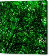 Forest Acrylic Print