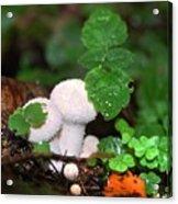 Forest Fairy Tale Acrylic Print