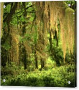 Forest Fantasy - Quinault - Gateway To Paradise On The Olympic Peninsula Wa Acrylic Print by Christine Till