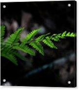 Forest Fern Acrylic Print