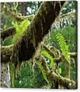 Forest Ferns Art Prints Fern Giclee Prints Baslee Troutman Acrylic Print