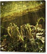 Forest Ferns Unfurling Acrylic Print