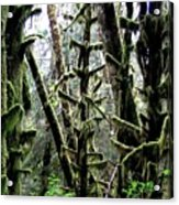 Forest Finery Acrylic Print