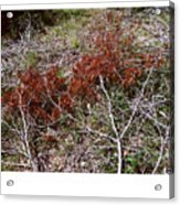 Forest Fire C Acrylic Print