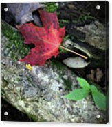 Forest Floor In Autumn Acrylic Print