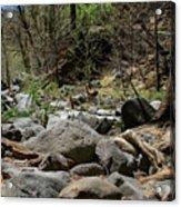 Forest Floor Near Oak Creek Acrylic Print