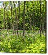 Forest Floor Dame's Rocket Acrylic Print