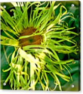 Forest Flower Acrylic Print by Jason Christopher
