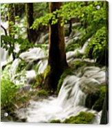 Forest Flows Acrylic Print