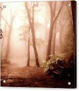 Forest Fog Acrylic Print