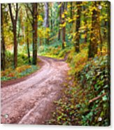 Forest Footpath Acrylic Print by Carlos Caetano