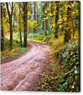 Forest Footpath Acrylic Print by Carlos Caetano