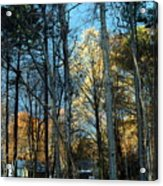 Forest For The Trees Acrylic Print