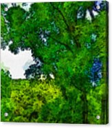 Forest Home Acrylic Print