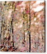 Forest In Autumn Acrylic Print