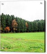 Forest In Bavaria Acrylic Print
