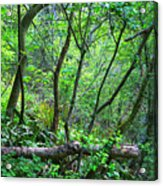 Forest In Hdr Acrylic Print