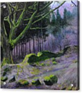 Forest In Wales Acrylic Print