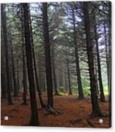 Forest Acrylic Print by Judy  Waller