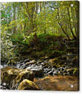 Forest Landscape Acrylic Print