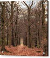 Forest Lane Near Maarsbergen Acrylic Print