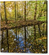 Forest Leaf Reflection Acrylic Print