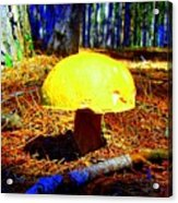 Forest Life Acrylic Print
