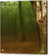 Forest Light 1 Acrylic Print