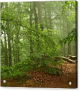 Forest Light 3 Acrylic Print