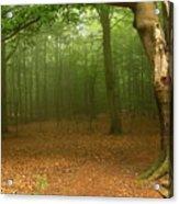Forest Light Acrylic Print