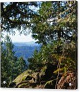 Forest Lookout Acrylic Print