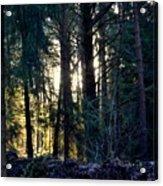 Forest Magic 8 Acrylic Print