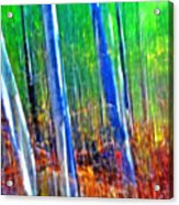 Forest Magic Acrylic Print