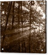 Forest Mist B And W Acrylic Print