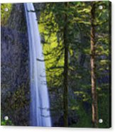 Forest Mist Acrylic Print by Chad Dutson