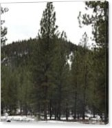 Forest Mountain Redux Acrylic Print