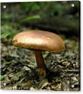 Forest Mushroom Acrylic Print