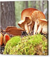 Forest Mushrooms Acrylic Print