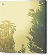 Forest Mysteria Acrylic Print