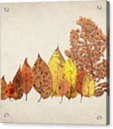 Forest Of Autumn Leaves II Acrylic Print