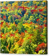 Forest Of Color Acrylic Print