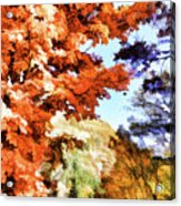 Forest Of Fall Colors Acrylic Print