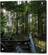 Woods At Yorktown Acrylic Print