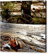 Forest Pals Acrylic Print