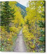 Forest Path Acrylic Print