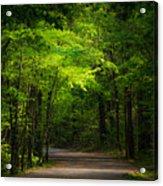 Forest Path Acrylic Print